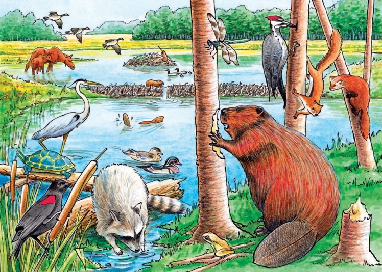 beaver pond tray.jpg