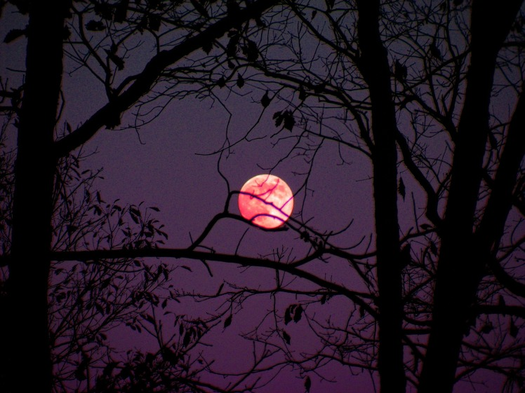 pink moon 3