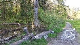 Upper beaver pond